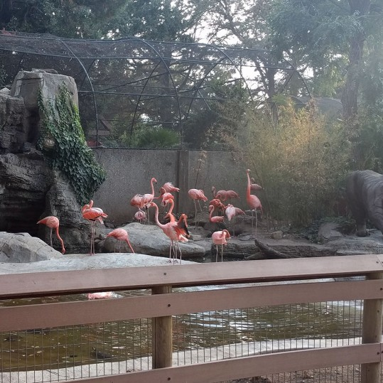 Flamingoes at Atascadero