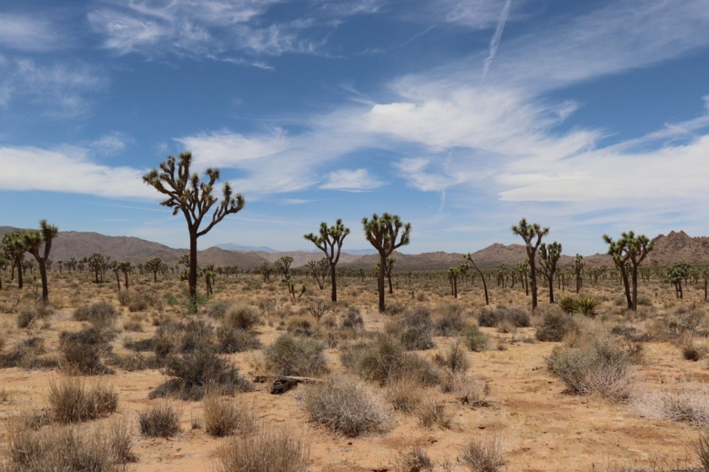 Joshua Tree National Park | ©Julie H.